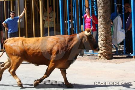 Horn bull person white blue.