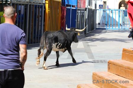 Horn javea animal bull person.