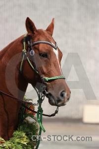 Horse animal.