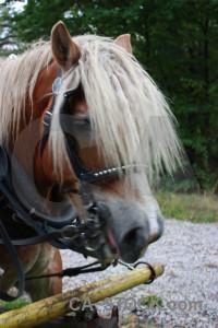 Horse animal green.