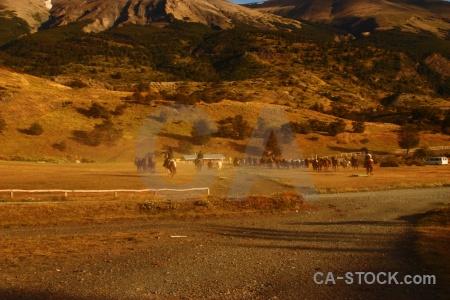Horse brown herd torres del paine mountain.