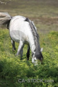 Horse green animal.