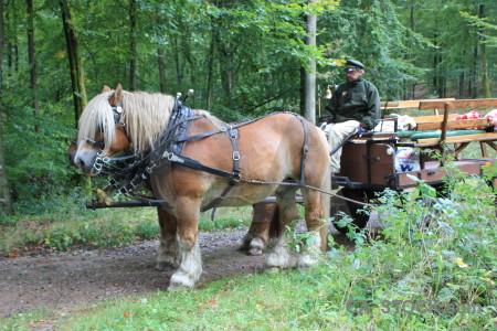 Horse green animal person.