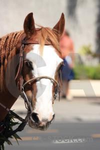 Horse white animal.