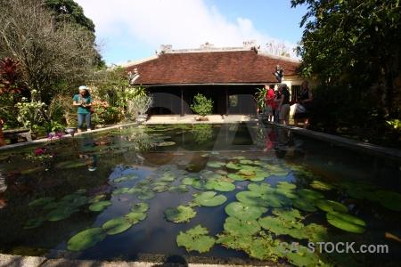 Hue garden vietnam lily asia.