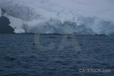 Ice animal penola strait antarctic peninsula sea.
