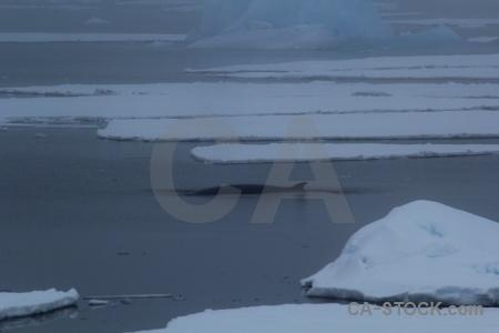 Ice antarctica cruise whale adelaide island sea.