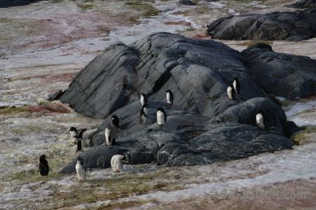 Ice penguin wilhelm archipelago algae day 8.