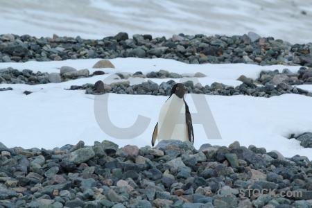 Ice stone antarctica cruise penguin south pole.
