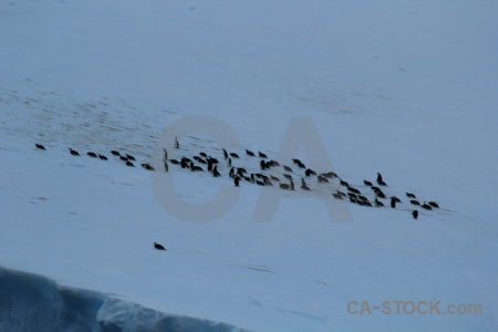 Iceberg antarctica cruise animal penguin drake passage.