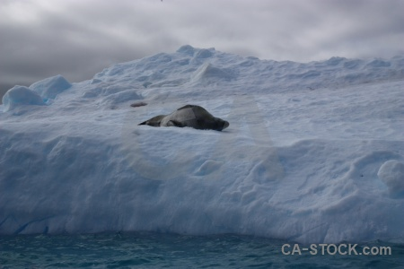 Iceberg argentine islands antarctica cruise cloud animal.
