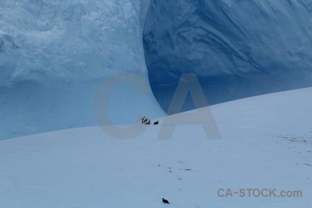 Iceberg penguin drake passage ice day 4.