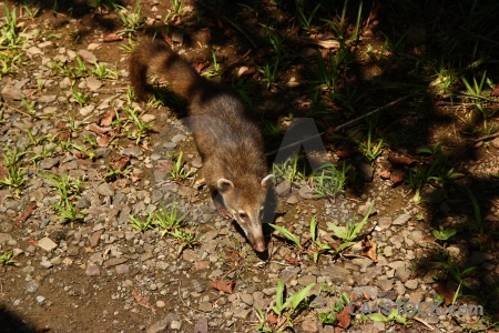 Iguacu falls animal coatis argentina unesco.