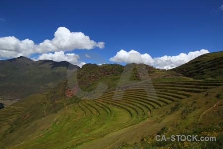 Inca bush altitude pisac grass.