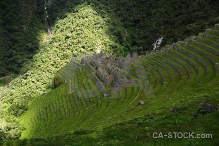 Inca grass winay wayna altitude peru.