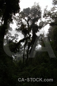 Inca trail andes cloud peru tree.