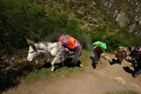 Inca trail tree peru altitude.