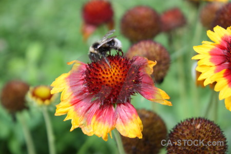 Insect animal bee plant flower.