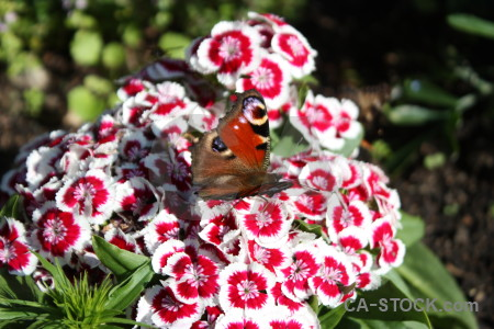 Insect animal butterfly plant flower.