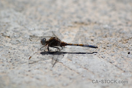 Insect animal europe gray dragonfly.