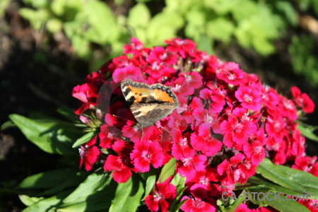 Insect animal flower plant butterfly.