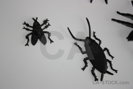 Insect animal gray spider plastic.