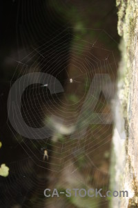 Insect animal web spider.