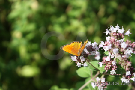 Insect butterfly flower animal plant.