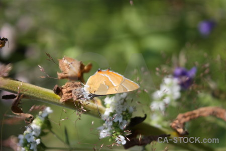 Insect flower plant animal butterfly.