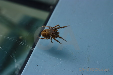 Insect spider animal.