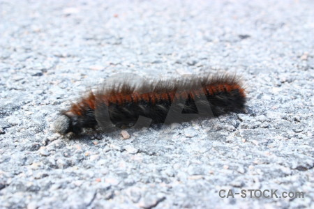 Insect white animal caterpillar.