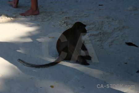 Island phi beach thailand ko don.