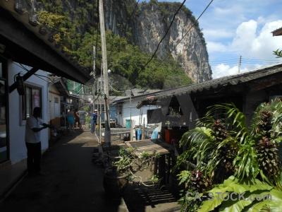 Island thailand southeast asia tree koh panyee.