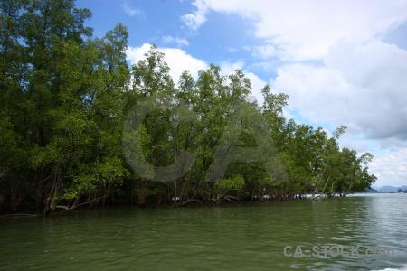 Island water asia mangrove thailand.