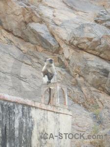 Jaipur hindu asia animal south.