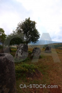 Jar sky urn tree plain of jars.