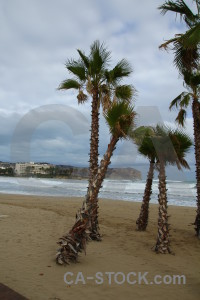 Javea arenal palm tree cloud europe.