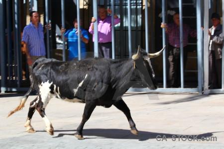 Javea bull animal europe person.