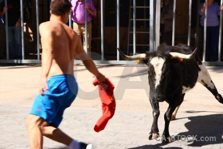 Javea bull running animal white person.