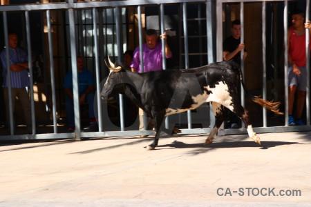 Javea bull running spain horn.