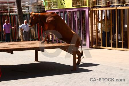 Javea bull running white horn spain.