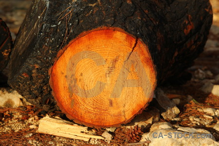 Javea circle log wood spain.