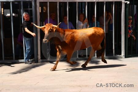 Javea europe animal bull running person.