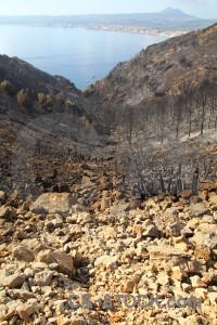 Javea europe ash burnt tree.
