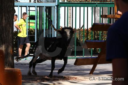 Javea horn person animal bull running.