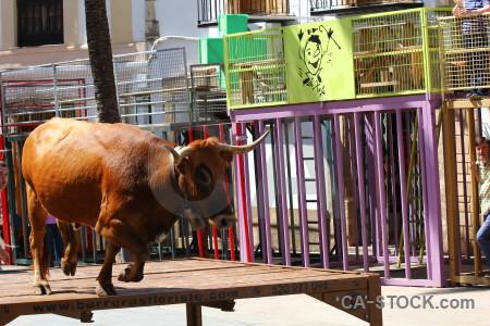 Javea person animal bull running europe.