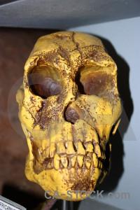 Javea skull cueva de las calaveras benidoleig orange.