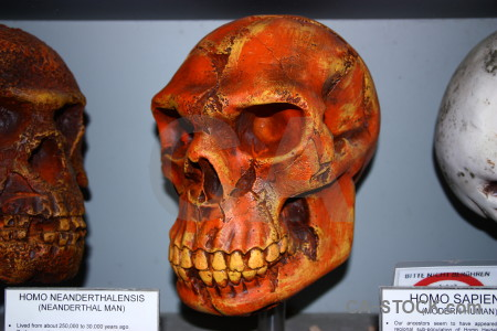 Javea skull europe benidoleig spain.