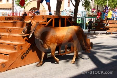 Javea spain animal bull running.
