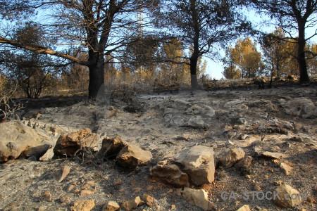 Javea spain tree montgo fire burnt.